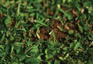 ants-300x206.jpg