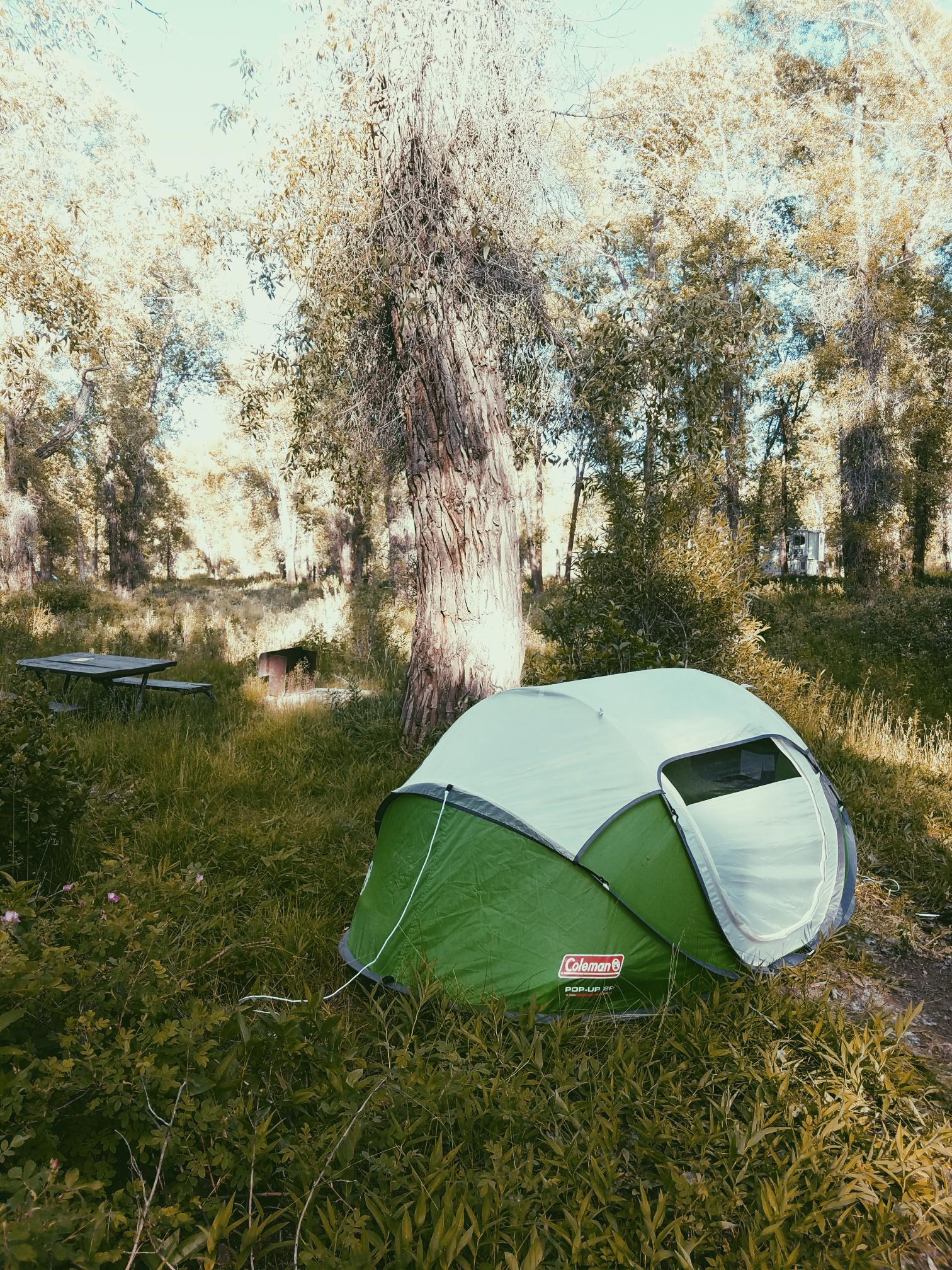 Gros Ventre Campsite
