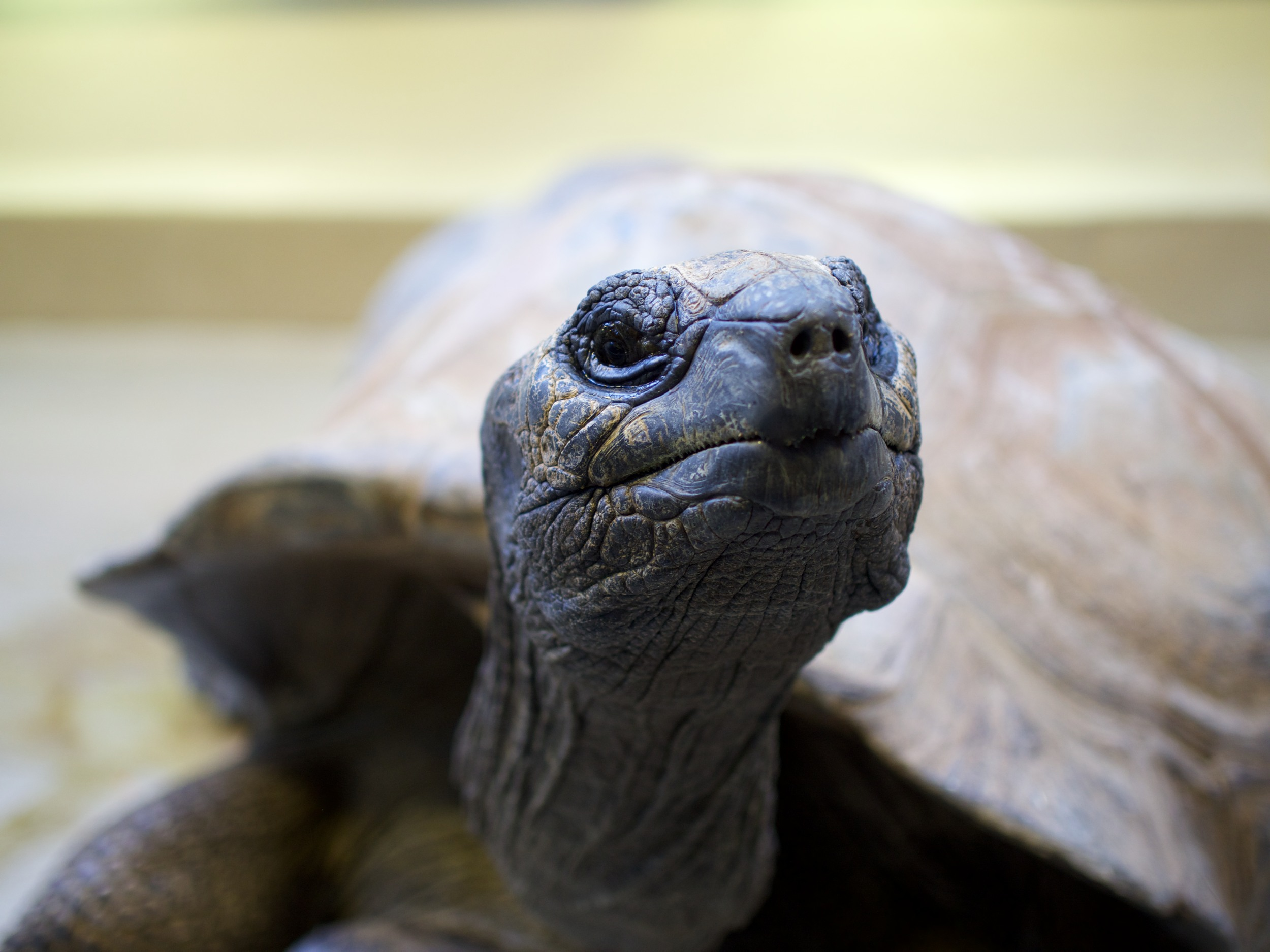 Turtle in D.C. Zoo