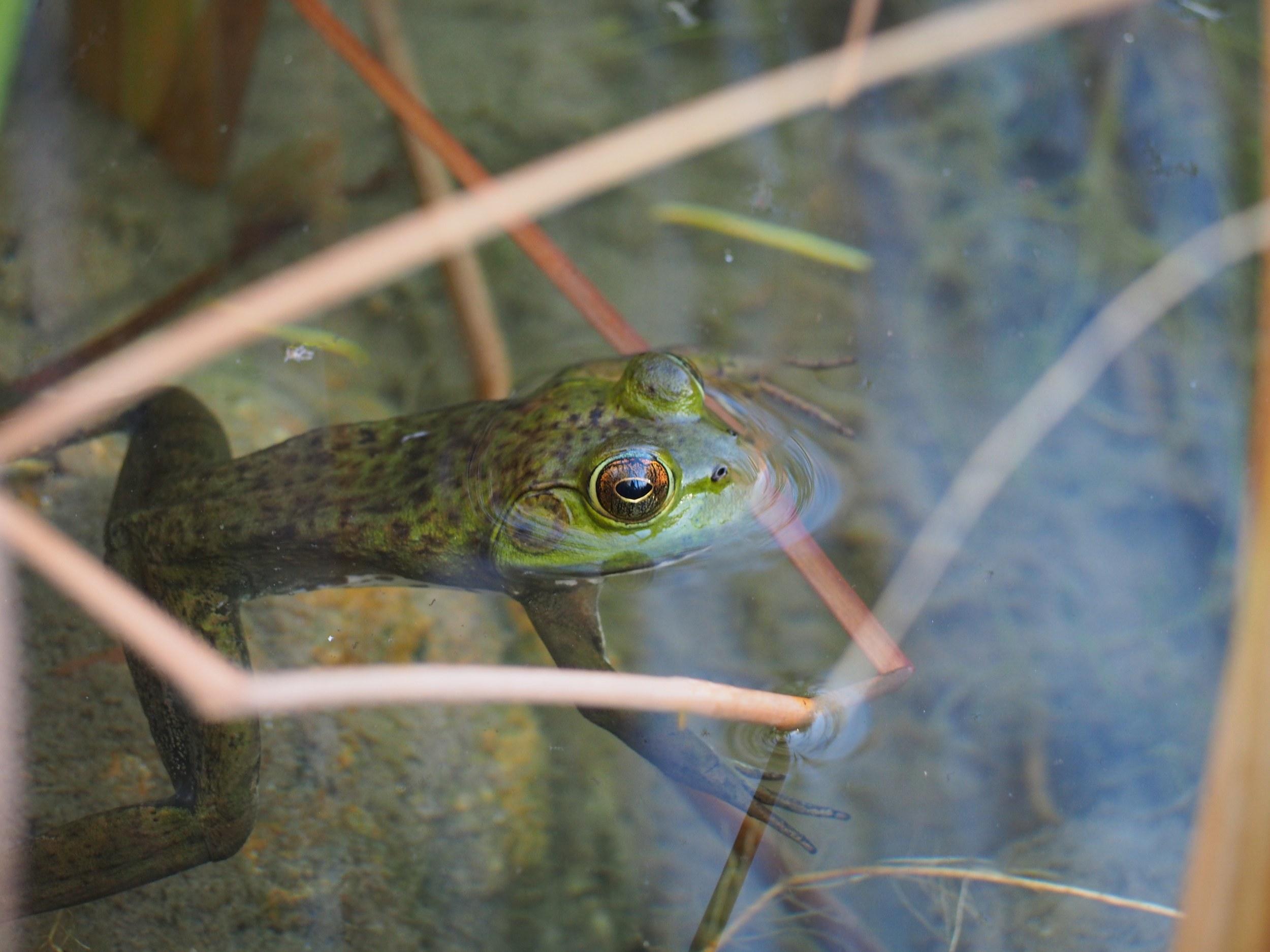 Frog in the Desert Botanical Garden