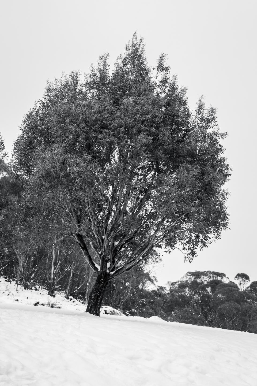 CRH_2018_A_DAY_IN_THE_SNOW_3396.jpg