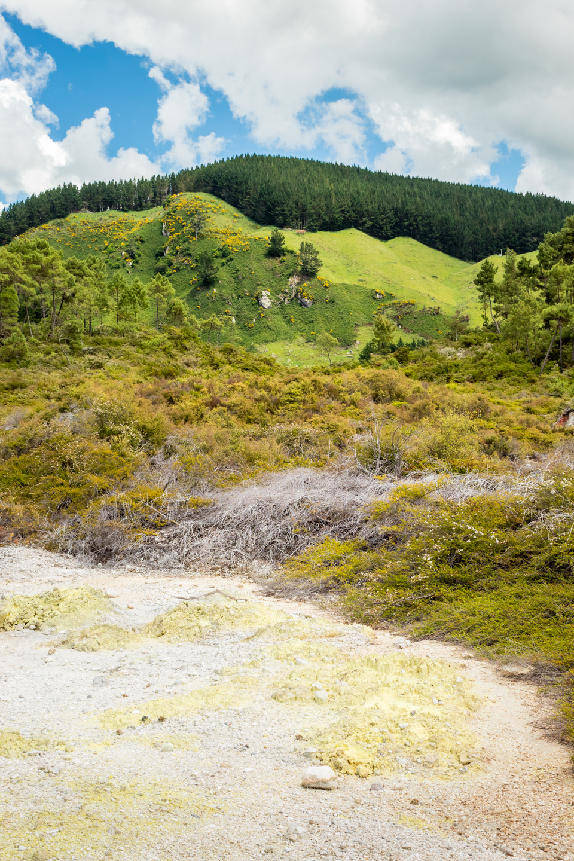 CRH_2018_NZ-DAY_08-FROM_WONDERLAND_TO_TAUPO_4311.jpg