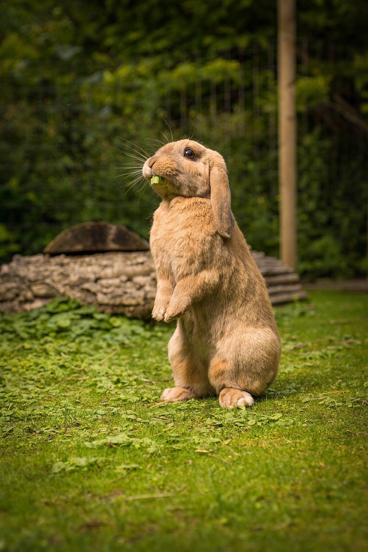 Kaninchen Ferienbetreuung
