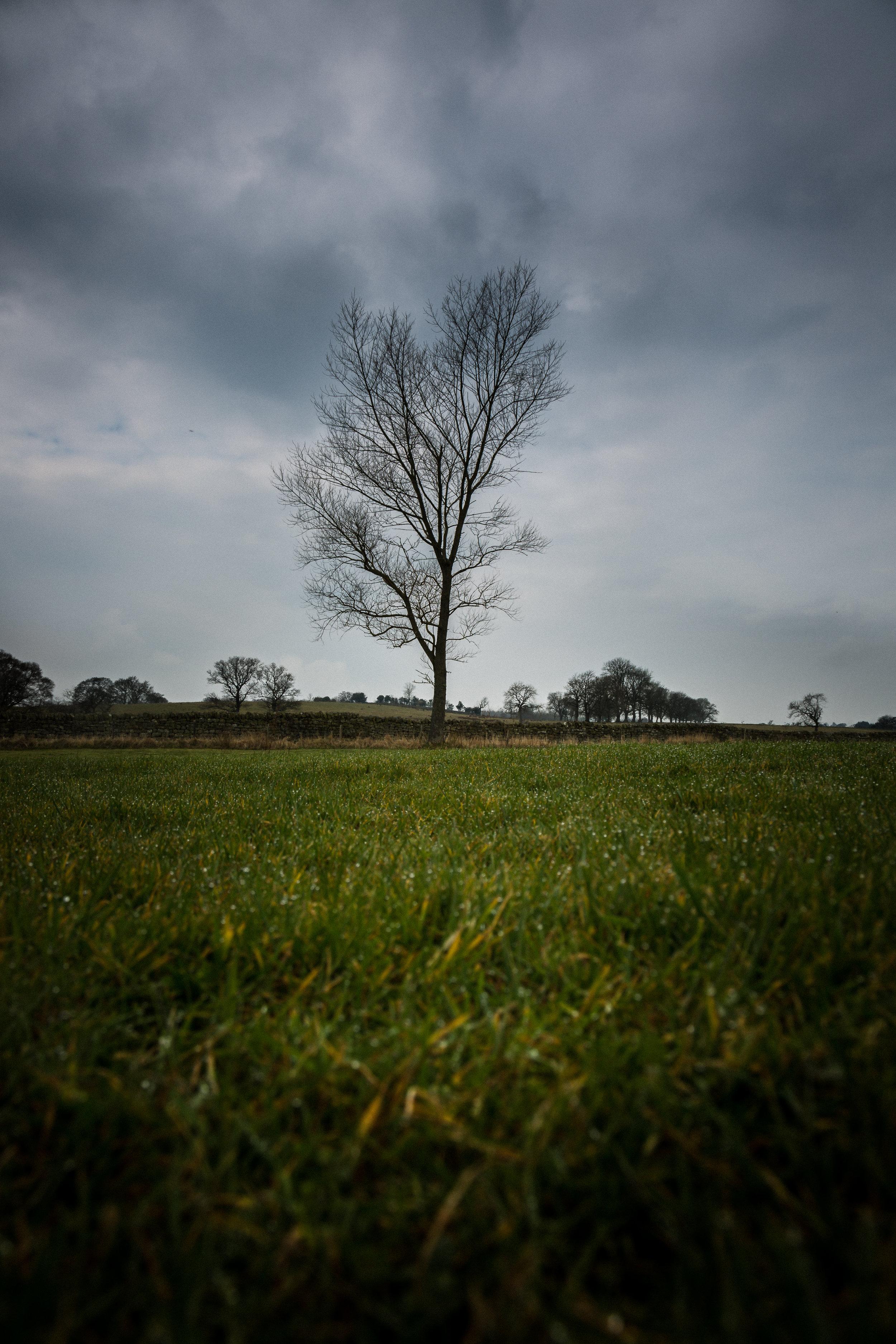 vindolanda tree (1 of 1).jpg