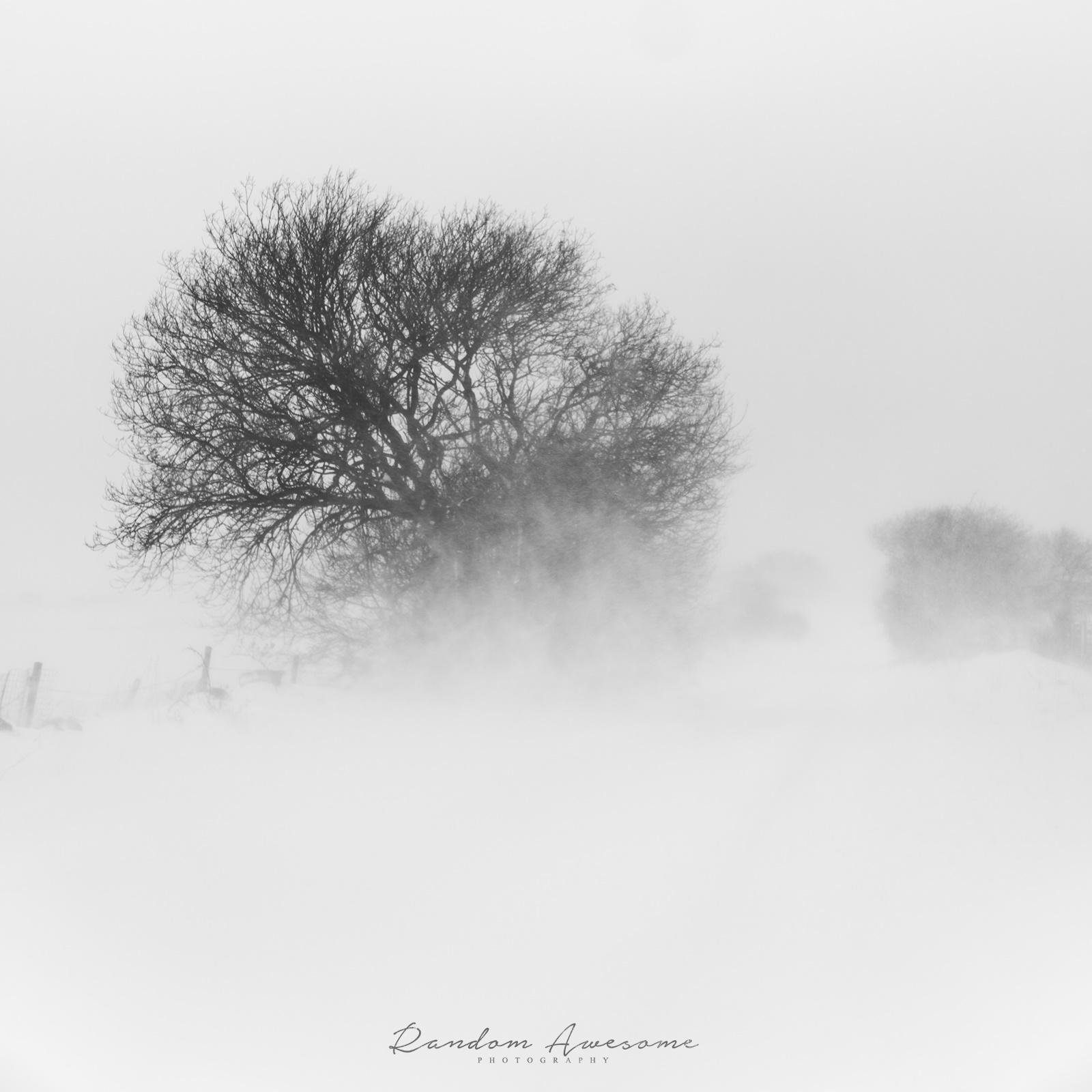 snow walk-13 SMALL SQuare.jpg