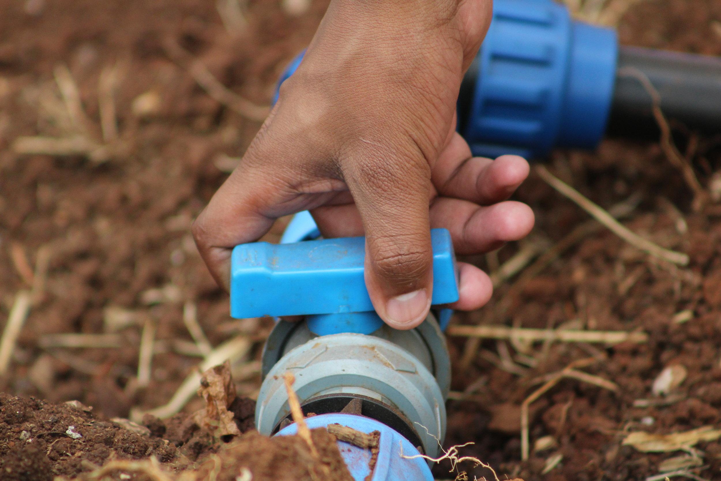 Illuminum Greenhouses technician demonstrates how to open a drip irrigation kit.JPG