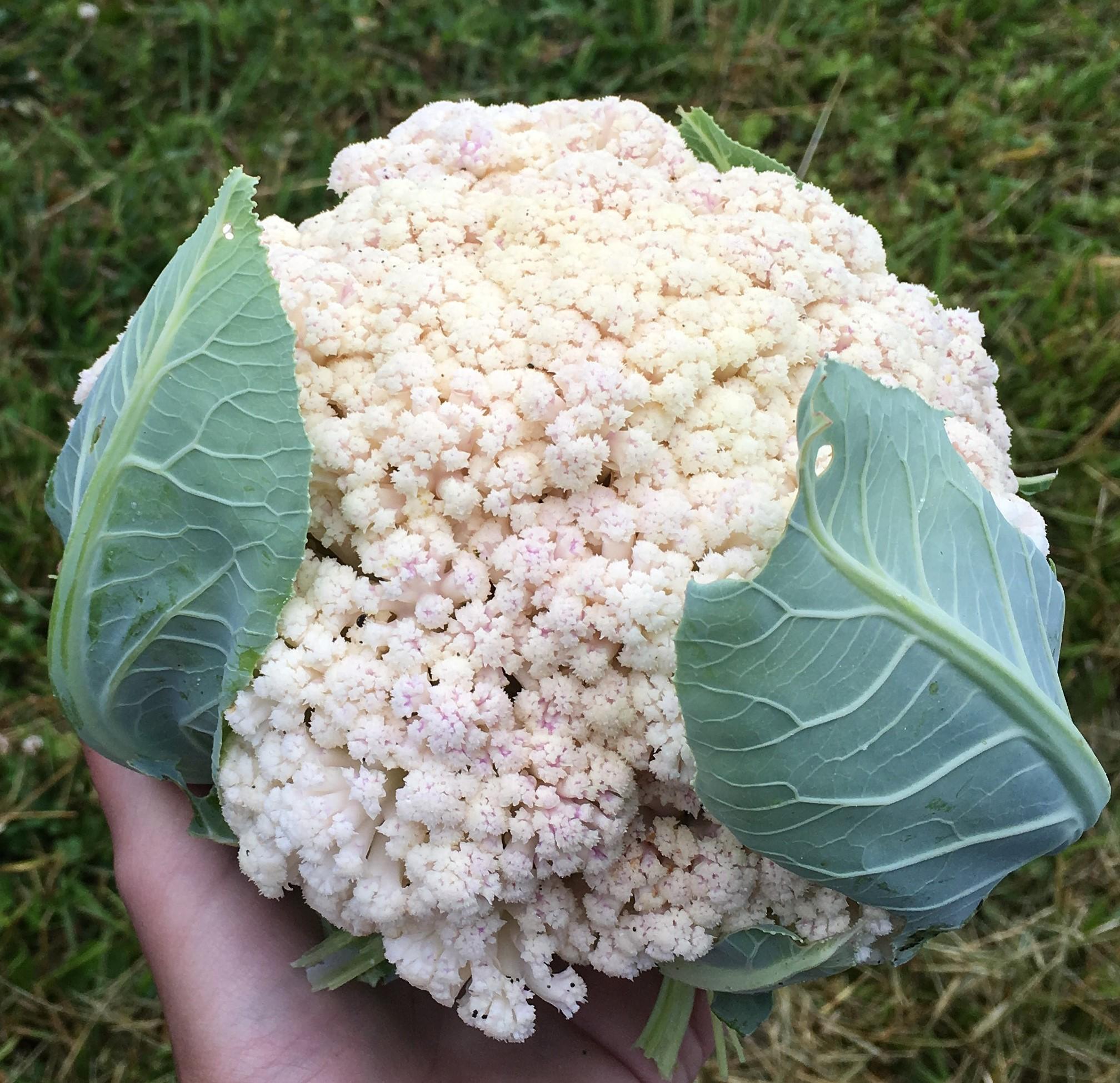 Organic Food Columbus