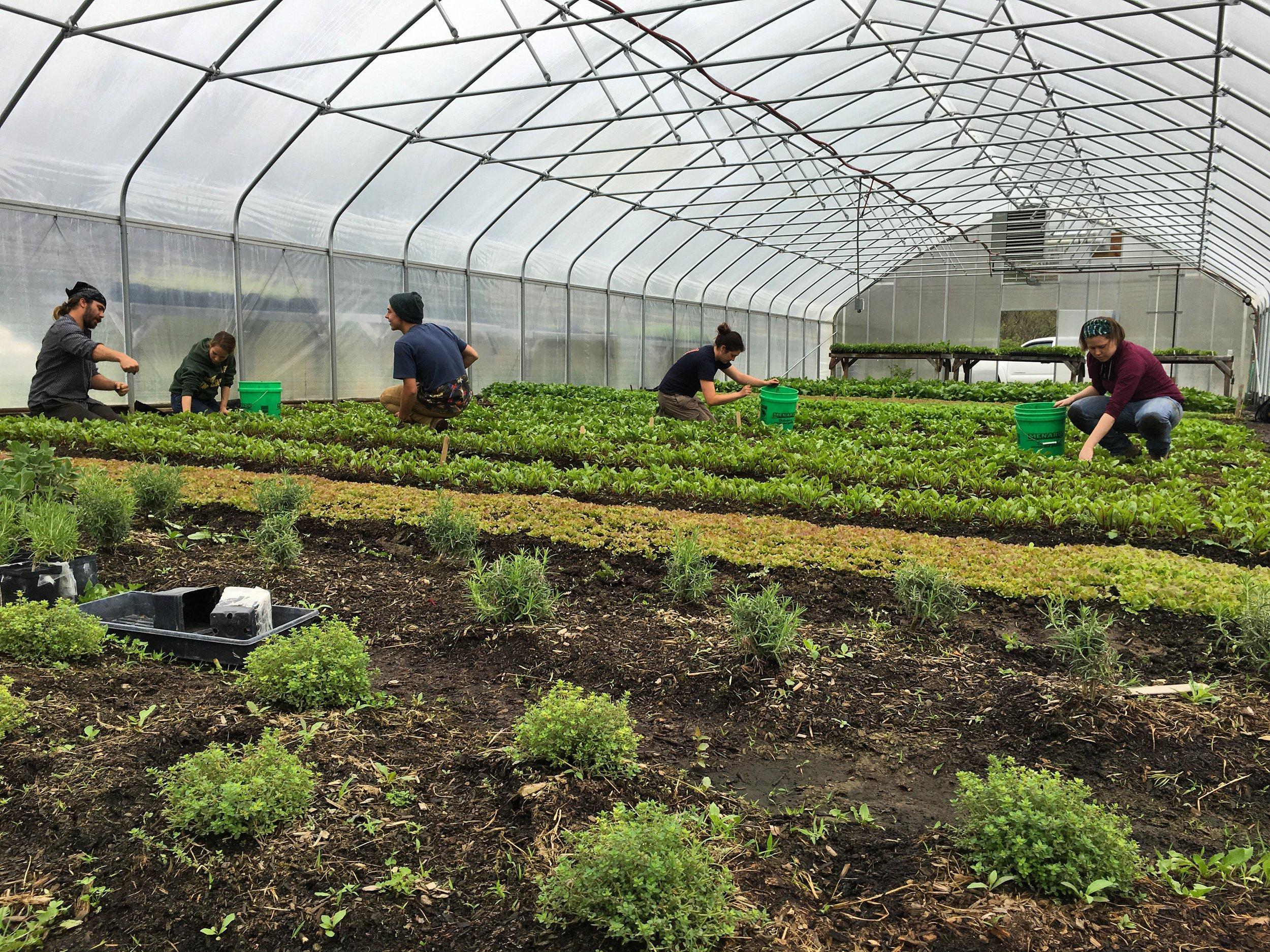 Sustainable Farm Apprentice Program Columbus