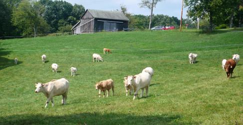 Local Beef Farm Columbus Ohio