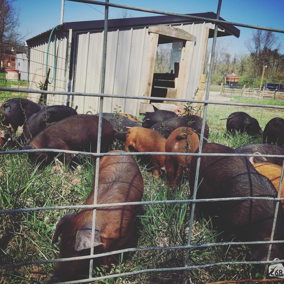 Local Pork Farm CSA Share Ohio