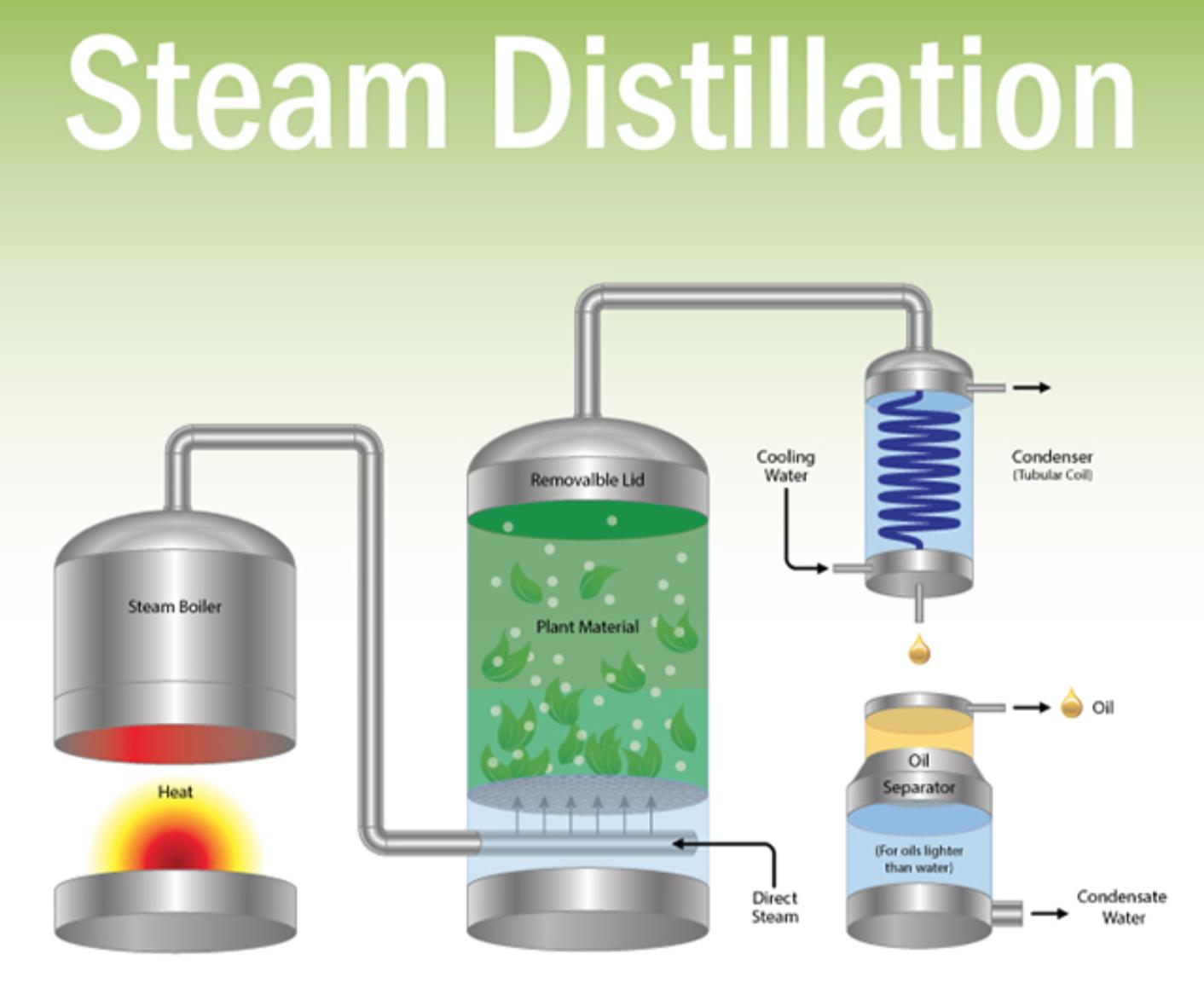 Destilação a vapor