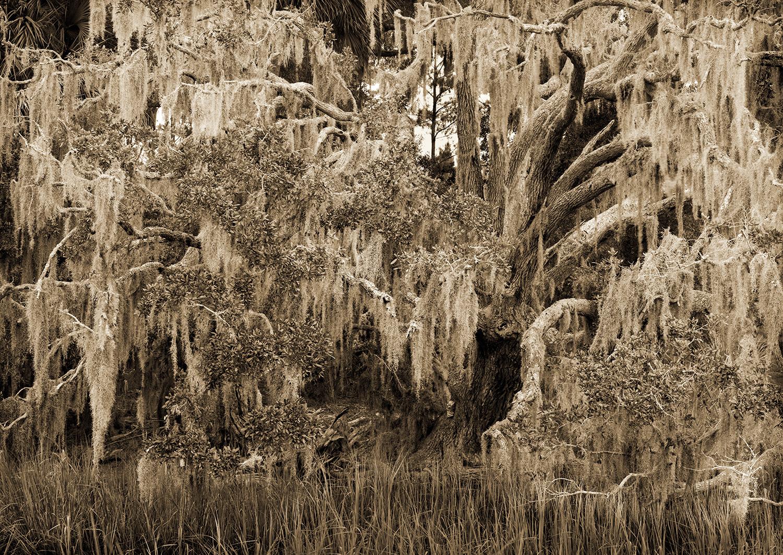 moss-and-marsh.jpg