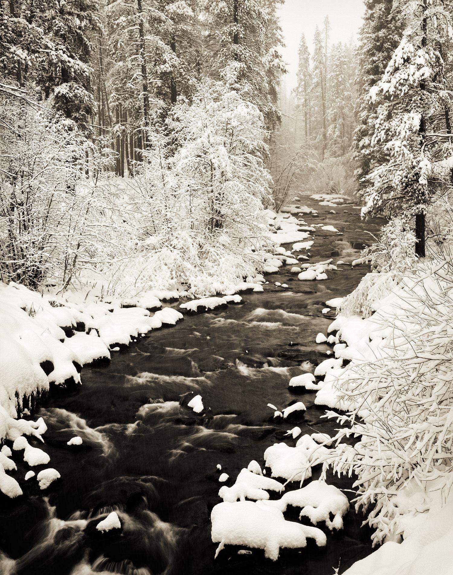 snowypineysepia3.jpg