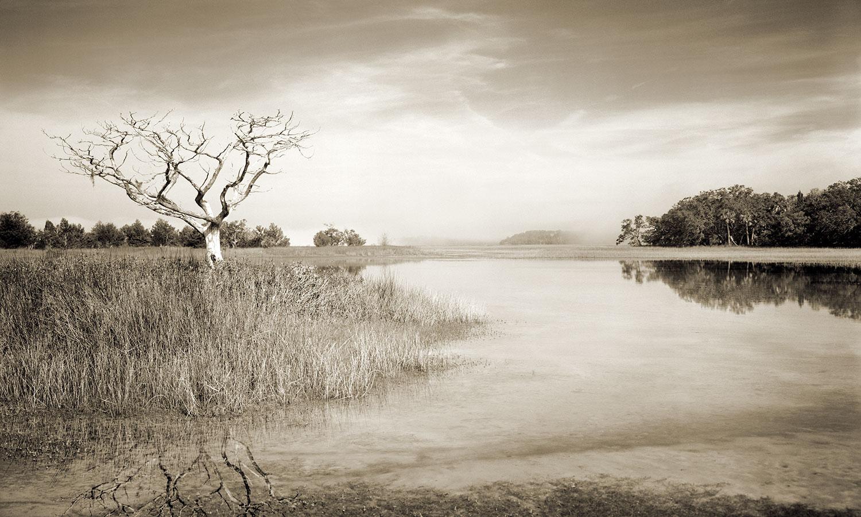 Fog Rolling Through The Marsh