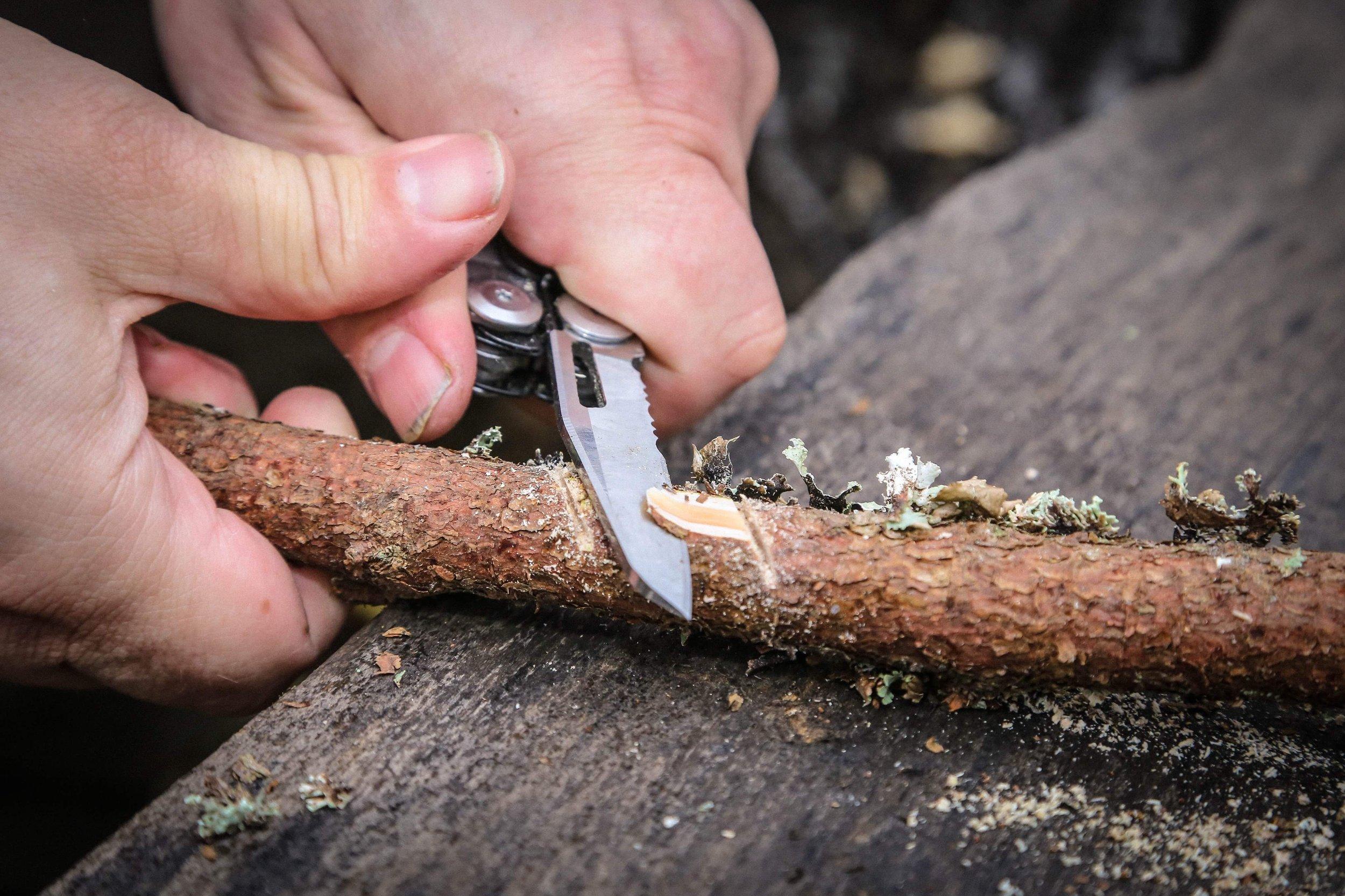 Kuusenoksa on katkaistu ja sahanterälle veistetään lovea.