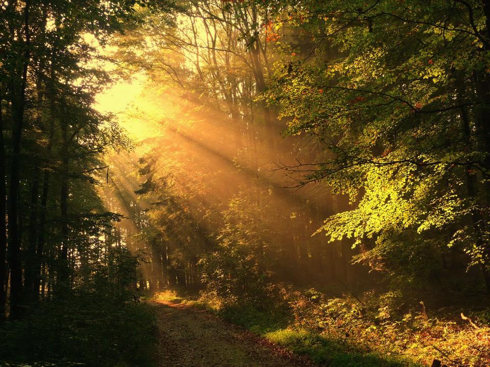 Sunrays image.jpg