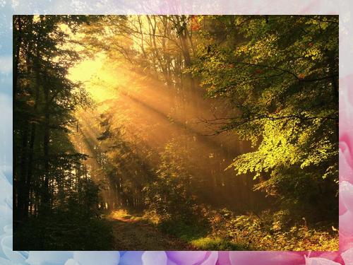 Sunrays+image 2.png