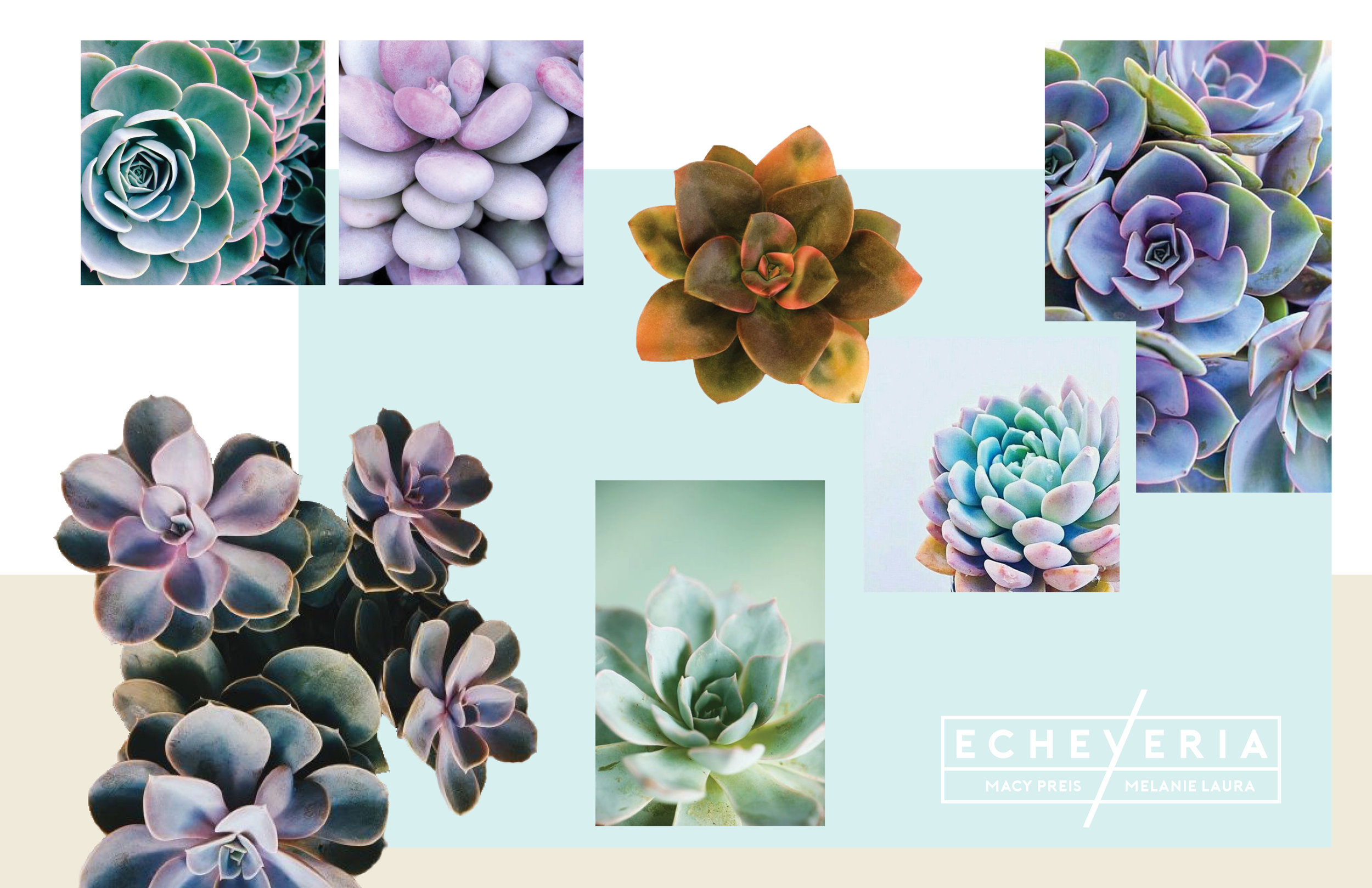 Echeveria Mood Board.jpg
