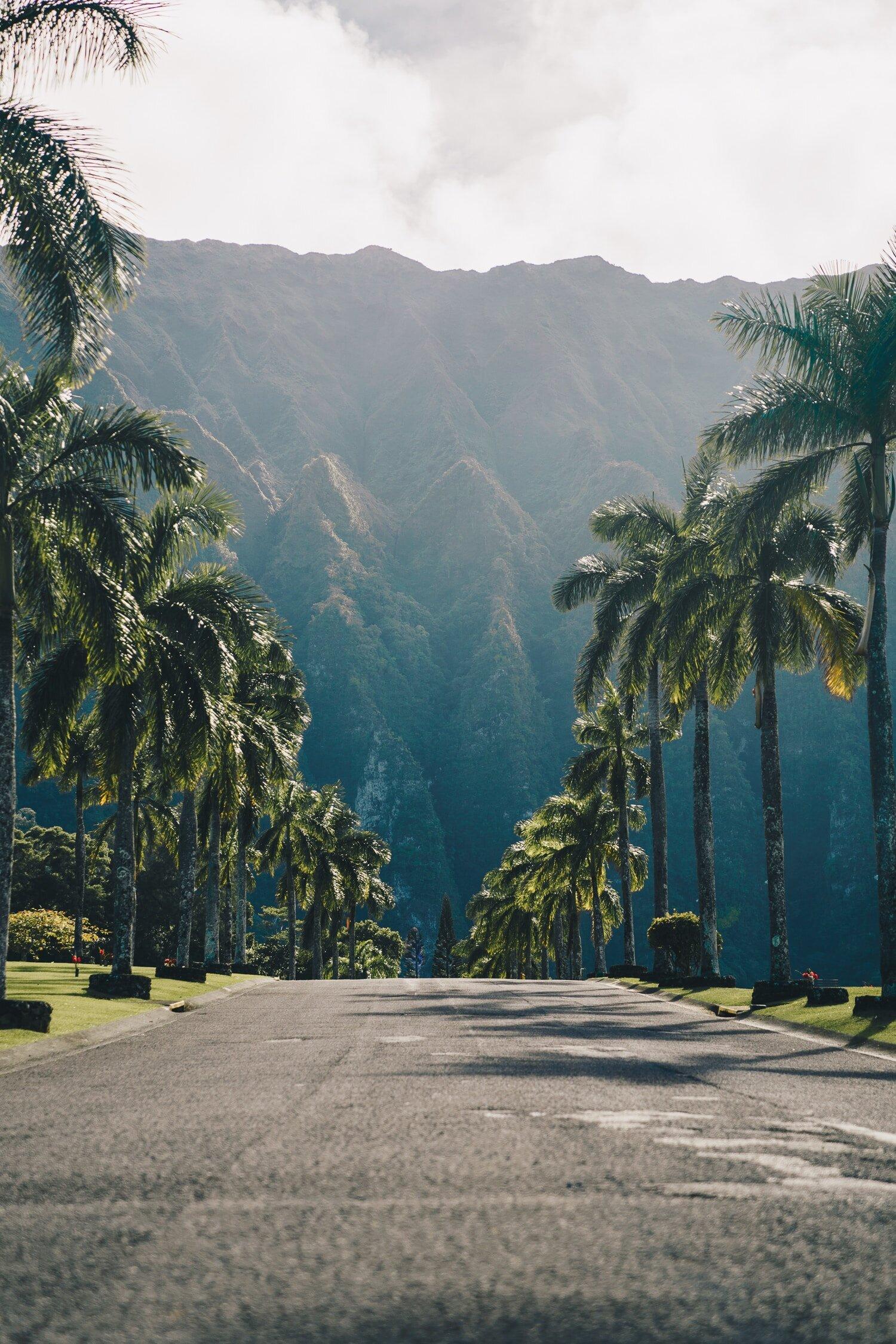 route-jungle