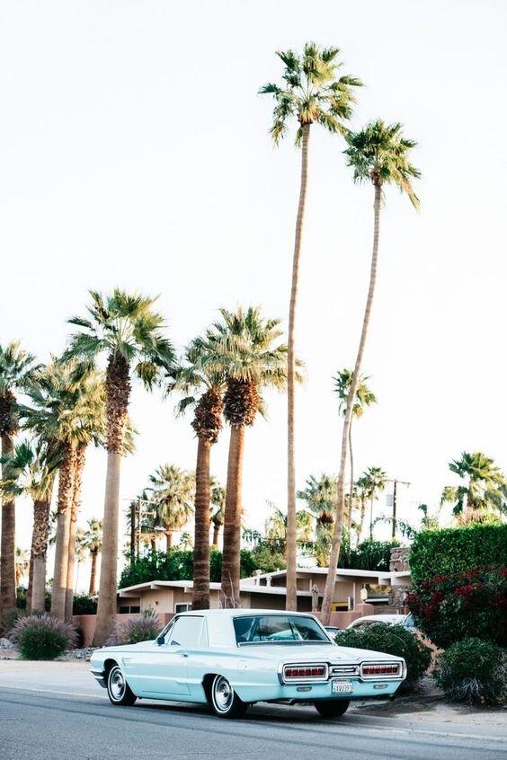 palmiers-californie-route