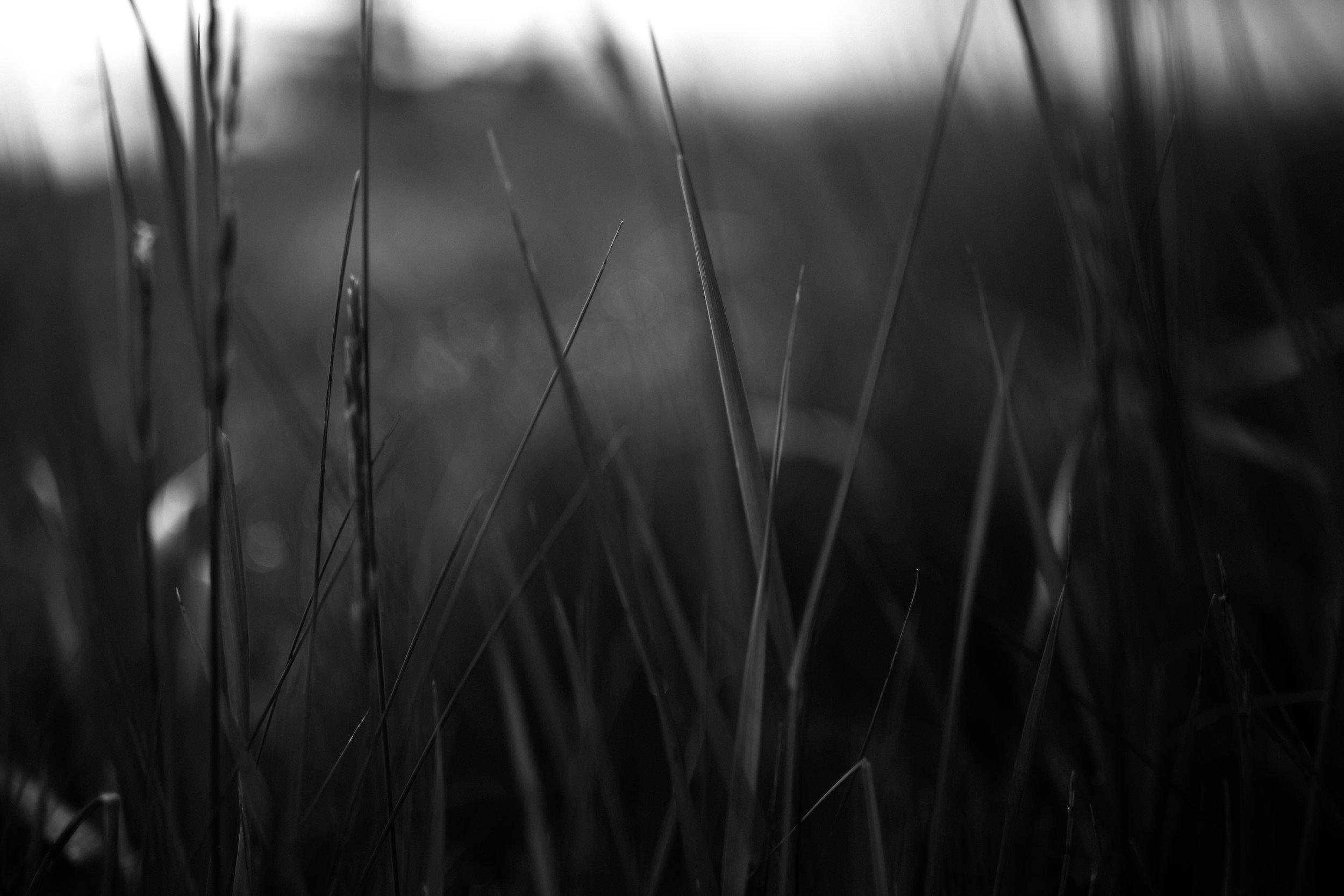 ashley soeder photography