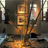 Larger Flower Displays