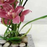 Cut Orchid Spectacular