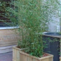 Outdoor Plants and Gardens