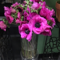 Purple - Lavender