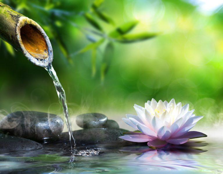zen-garden-768x599.jpg