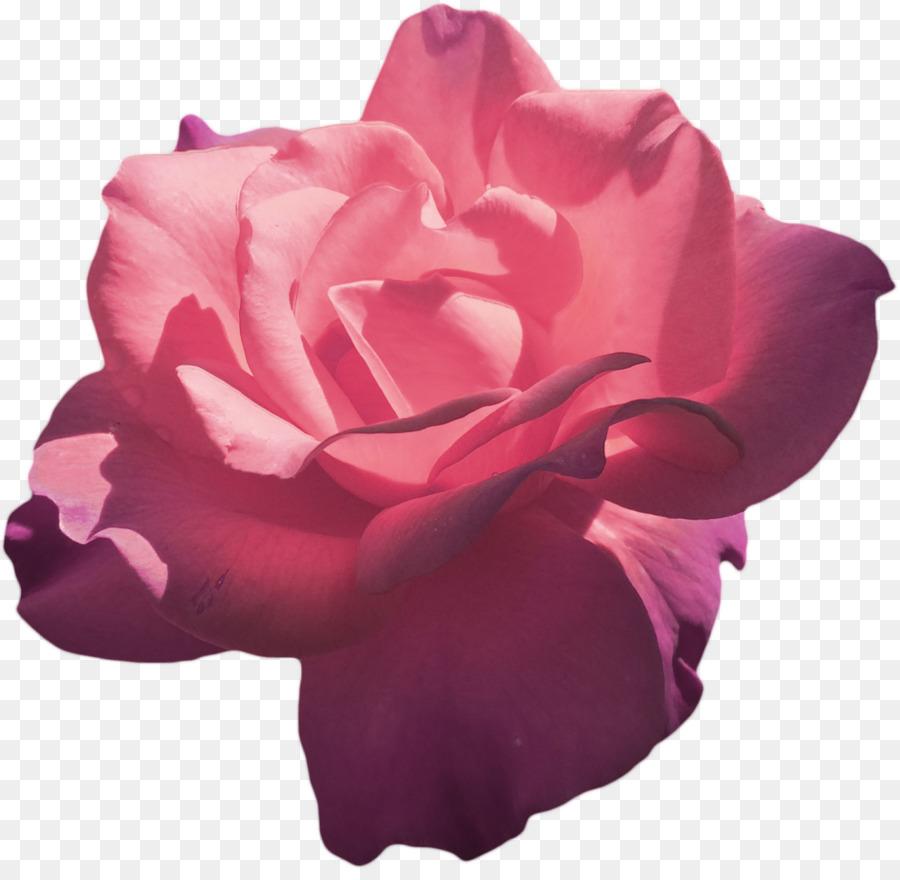 aesthetic-clipart-rose-490151-7282320.jpg