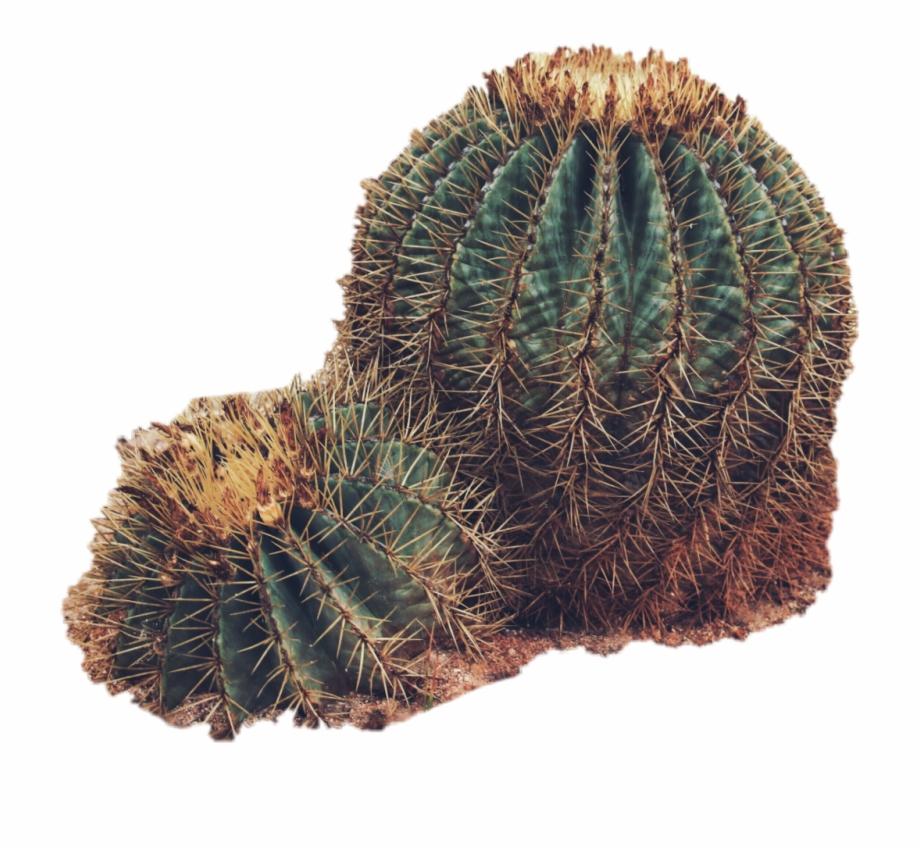19-192597_sticker-cactus-plants-desert-green-san-pedro-cactus.png