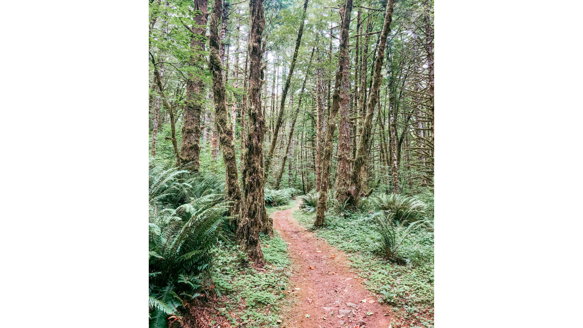 Hiking through the Tillamook Forest.