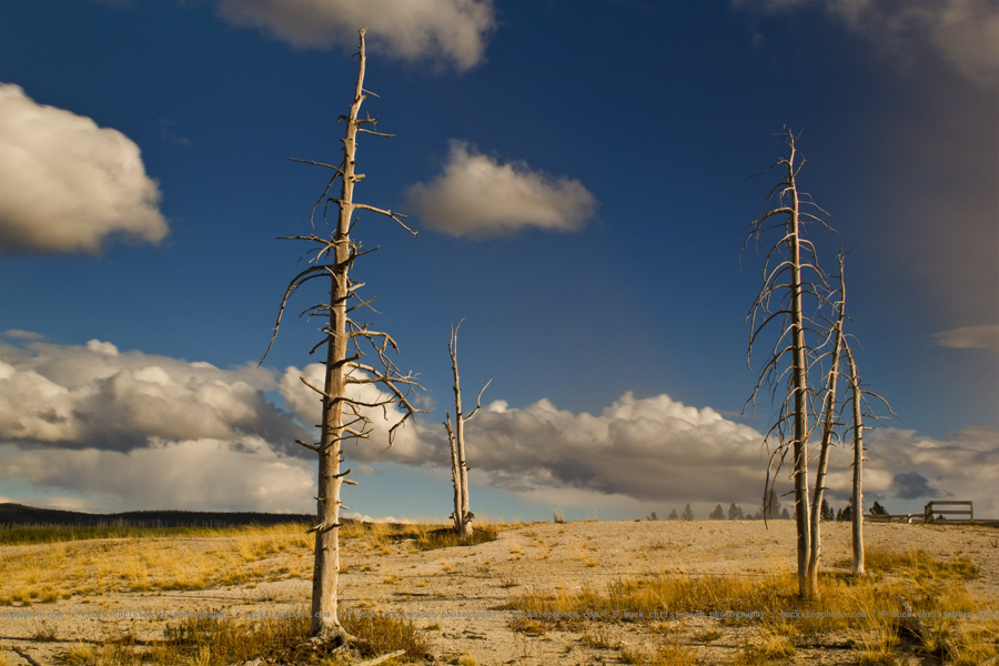 yellowstoneandtetons067