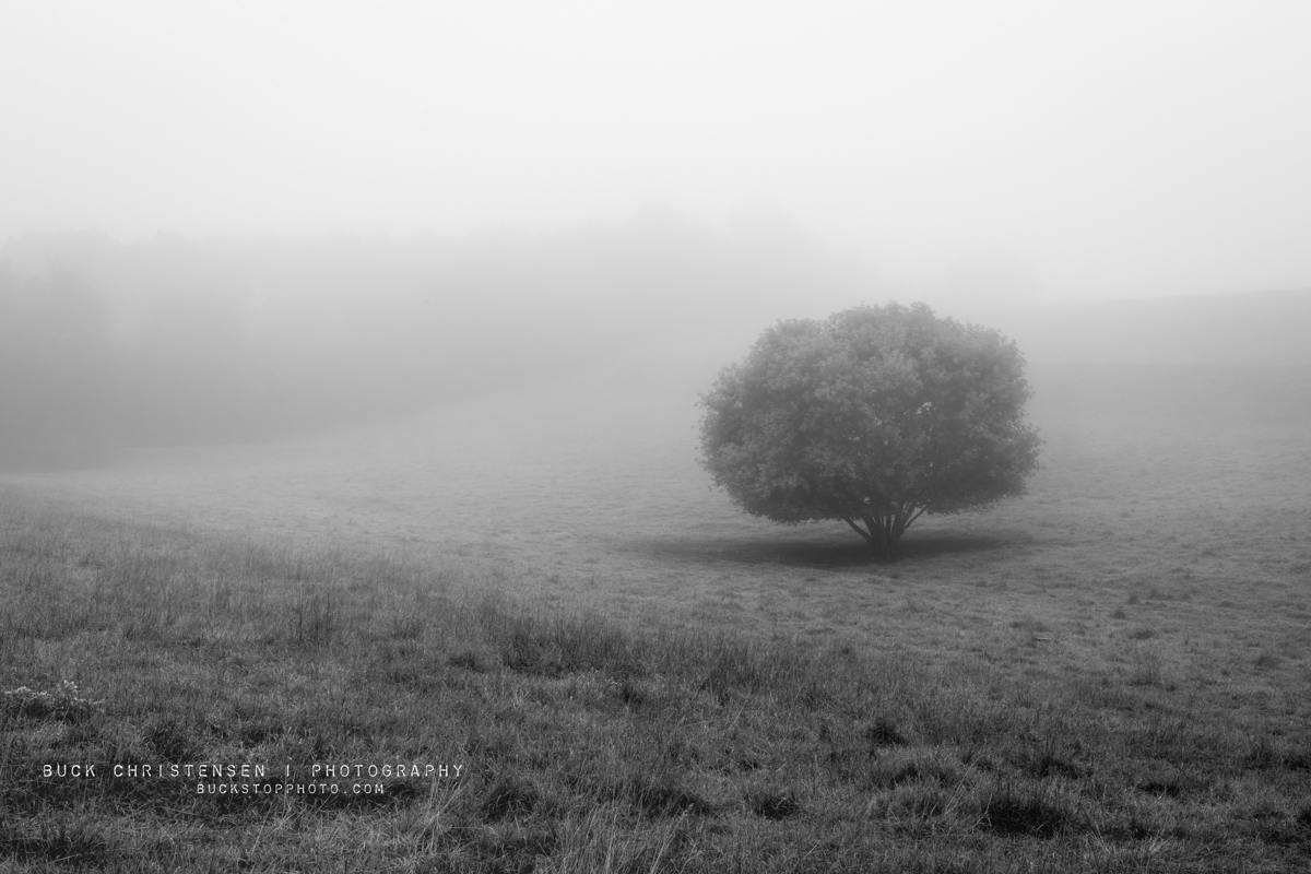 Black and white tree in fog, Council Bluffs, Iowa.