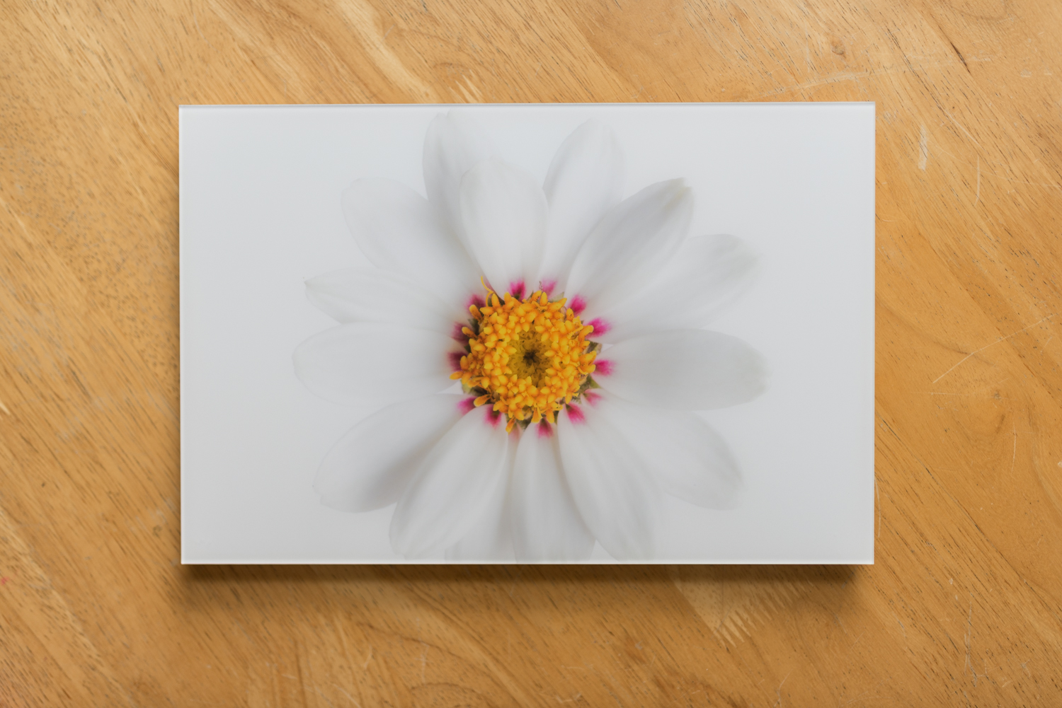 Print under acrylic glass, 8X12, top/side view.  A print under acrylic glass is a traditional print that is sealed between a crystal-clear acrylic glass (face) and an aluminum Dibond base. Silicone adhesive is applied around the borders to keep the print airtight and protected.