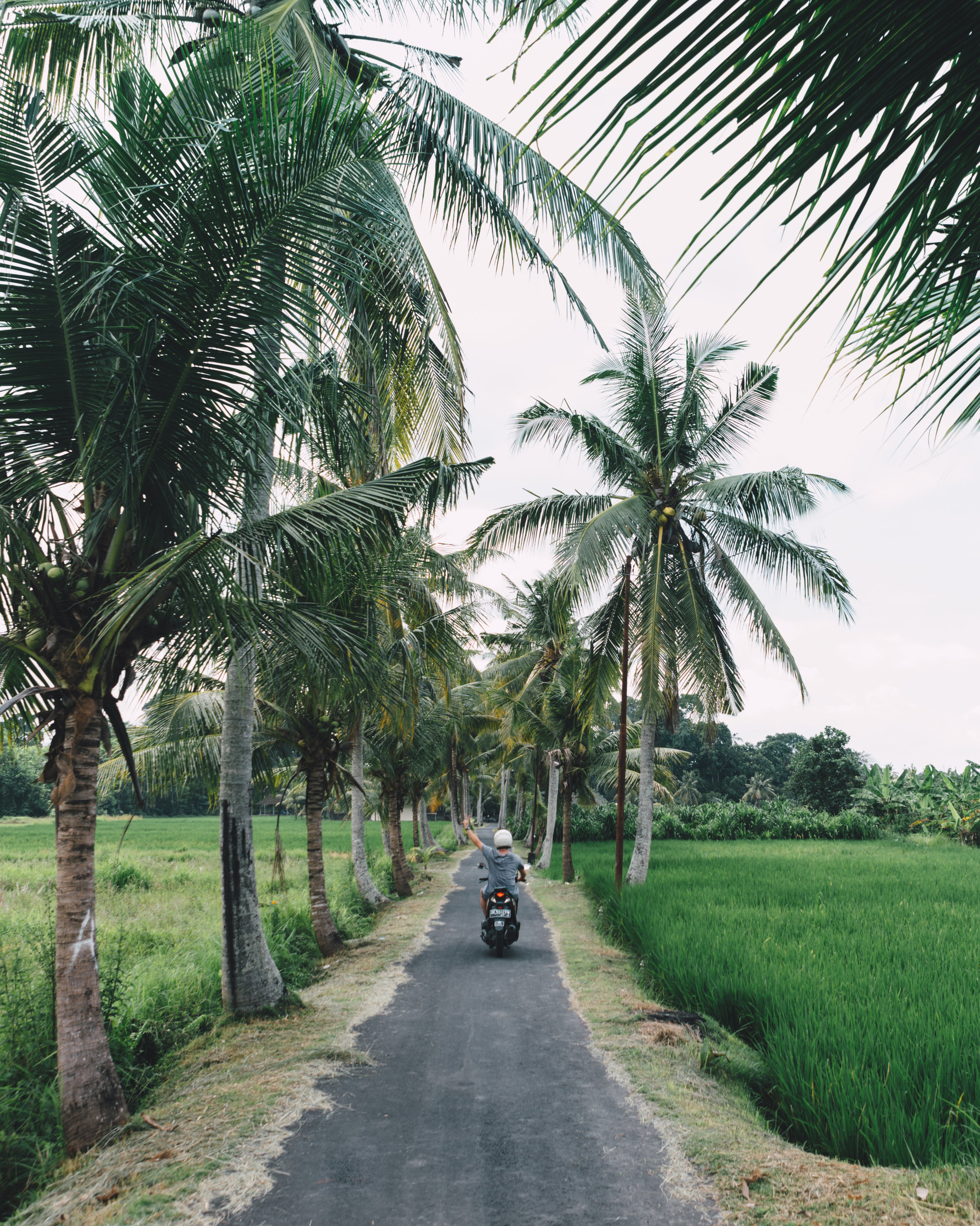 Bali-3571.jpg