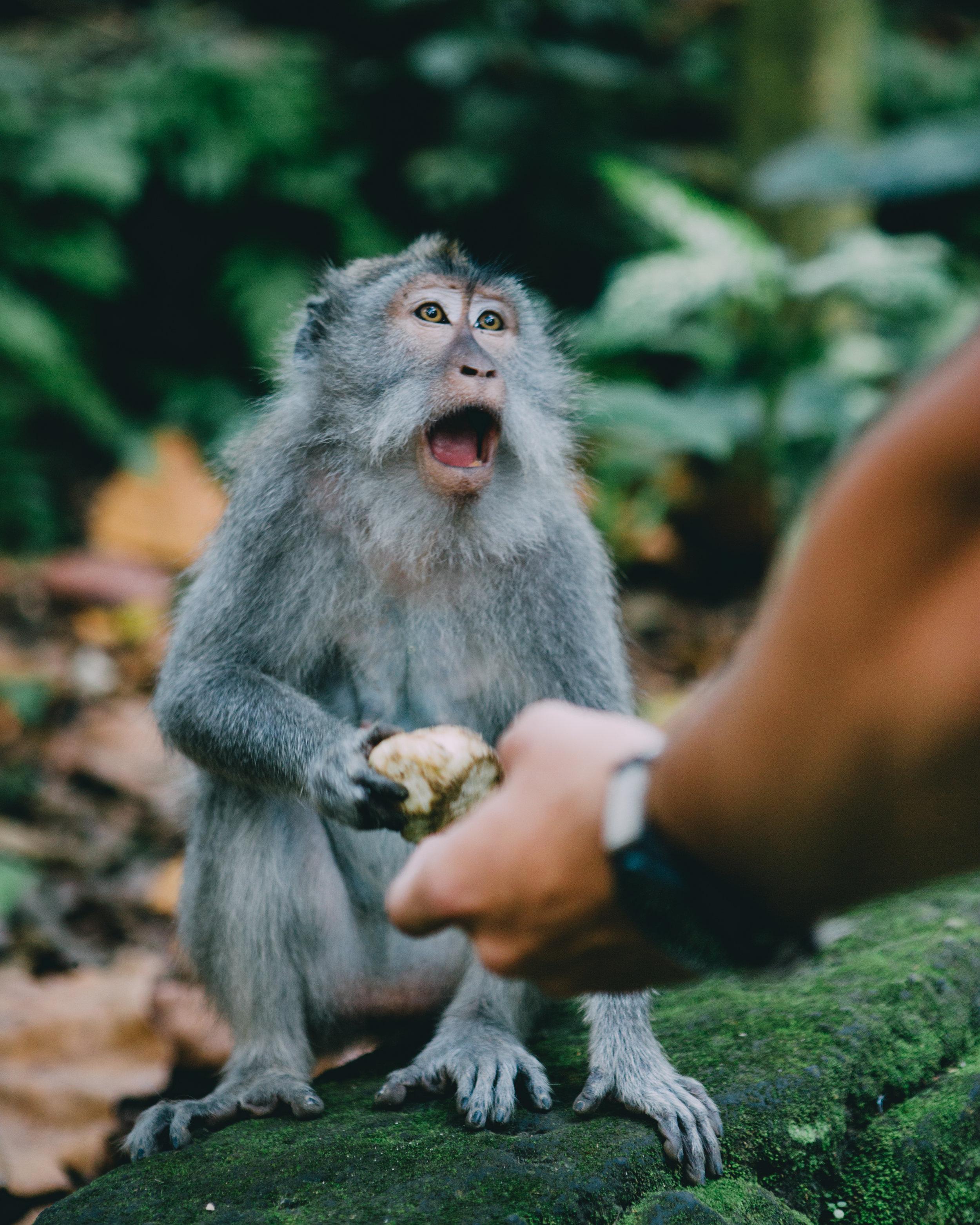Ubud Monkey Forest-5656.jpg