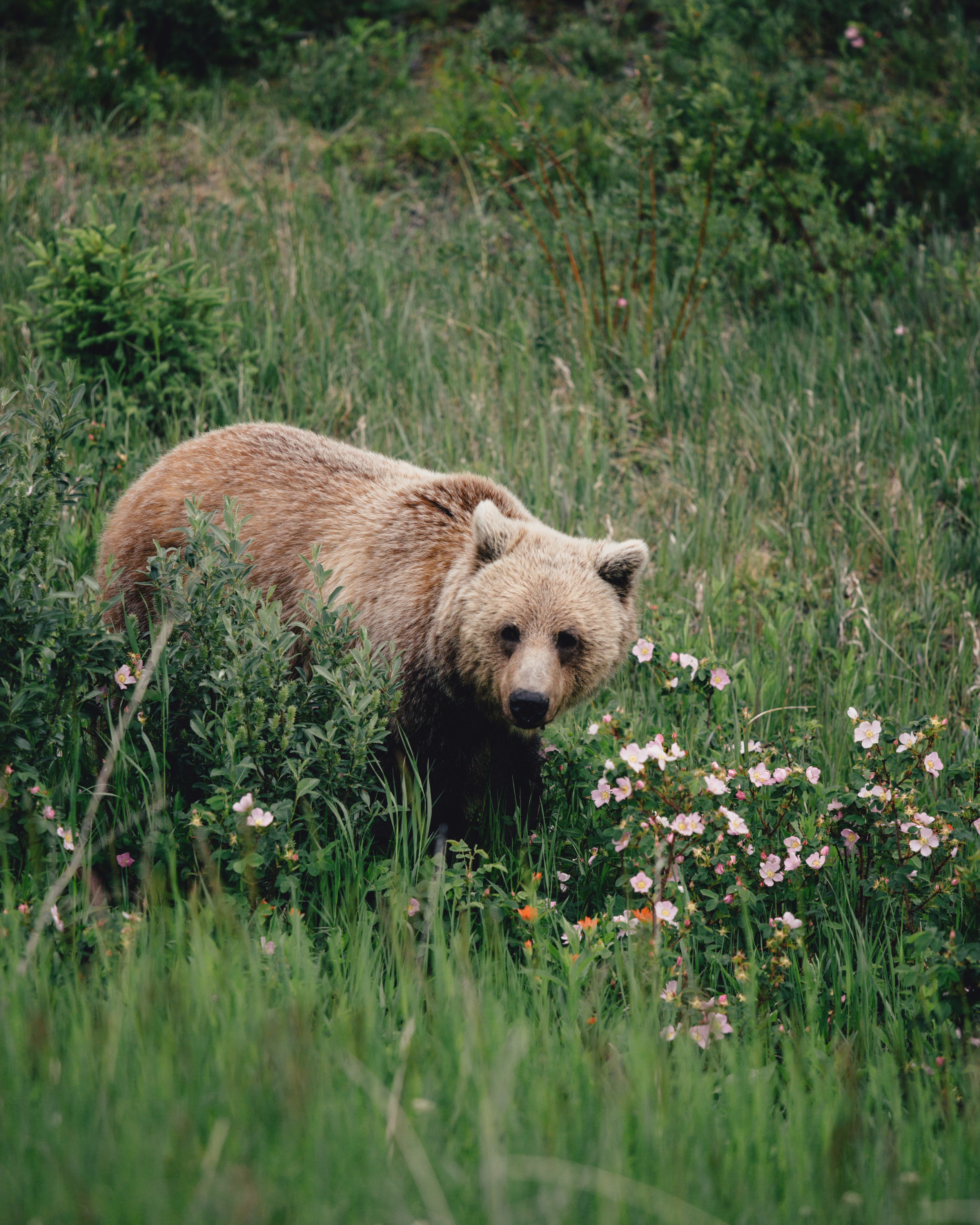 Grizzley - low res-6640.jpg