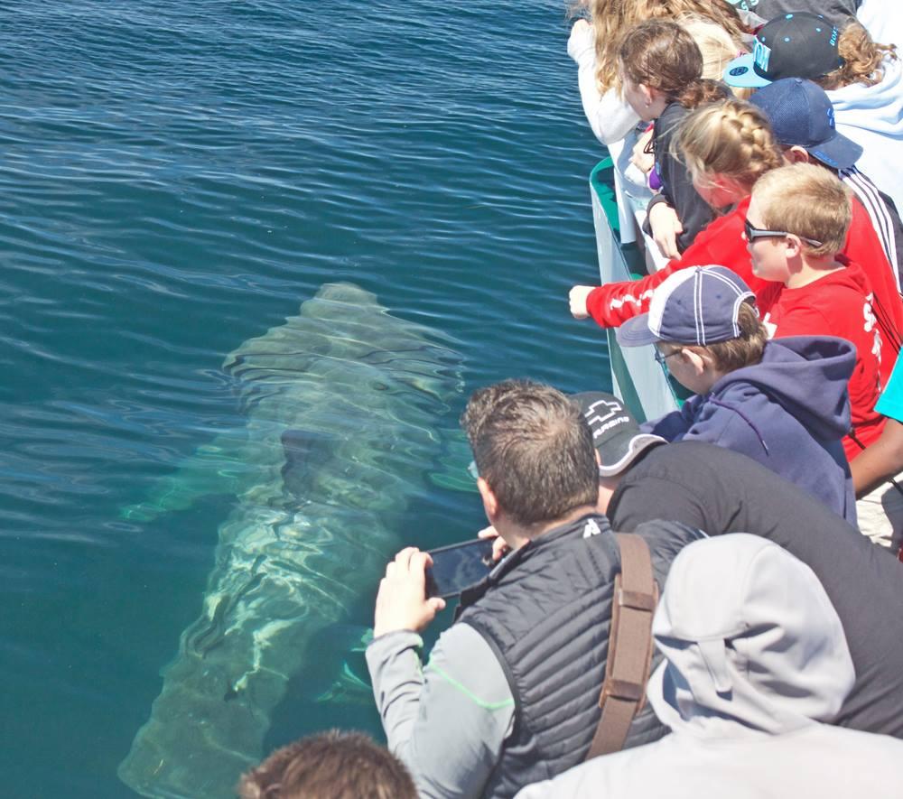 7 Seas Whale Watch