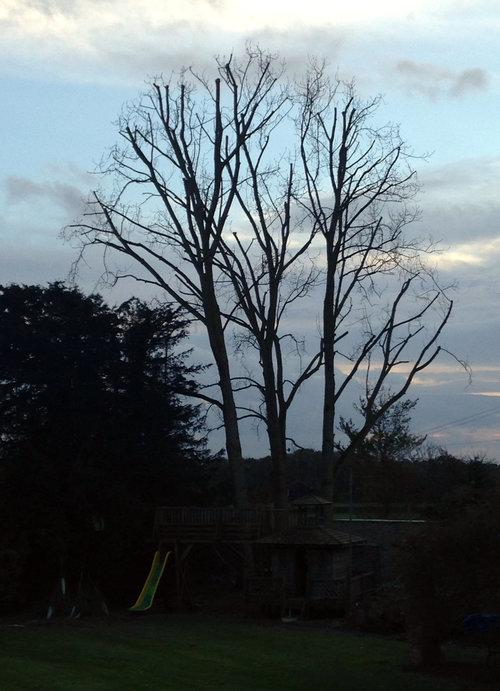 Tree work Bristol