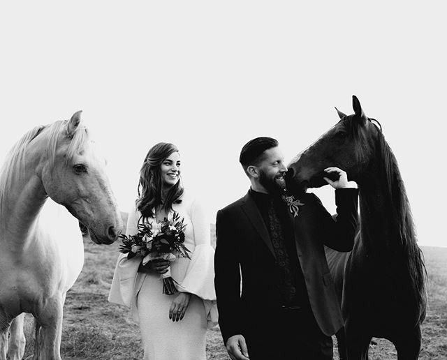 When a couple of beauties decide to photobomb sunset adventures 😍 these sweet horses made the evening being all cute and trying to eat the bouquet haha  _____ Having grown up around horses, I will always have a special appreciation for them. I think the bond we can share with them is so powerful + beautiful. I always think fondly of and miss our Reb whenever I see a brown babe like this guy 💕 HMU: @bridalbeautyonthego  Dress: @loho_bride Suit: @armani  Venue: @leonard_lake_reserve . . . . . #belovedstories  #junebugweddings #radlovestories #dirtybootsandmessyhair #adventurouselopementphotographer  #justgoshoot #oahuweddingphotographer #hawaiiweddingphotographer #destinationphotographer #elopementlove #mauiweddingphotographer #adventurouswedding #intimatewedding #loveintentionally #greenweddingshoes #elopementphotographer #brideandgroom #instaweddings #photobugcommunity #kauaiweddingphotographer #unconventionaltogs #yosemitewedding  #theventuresomeco #lookslikefilm #yosemiteweddingphotographer #annigrahampresets #adventurousweddingphotographer #yosemiteelopementphotographer #muchlove_ig
