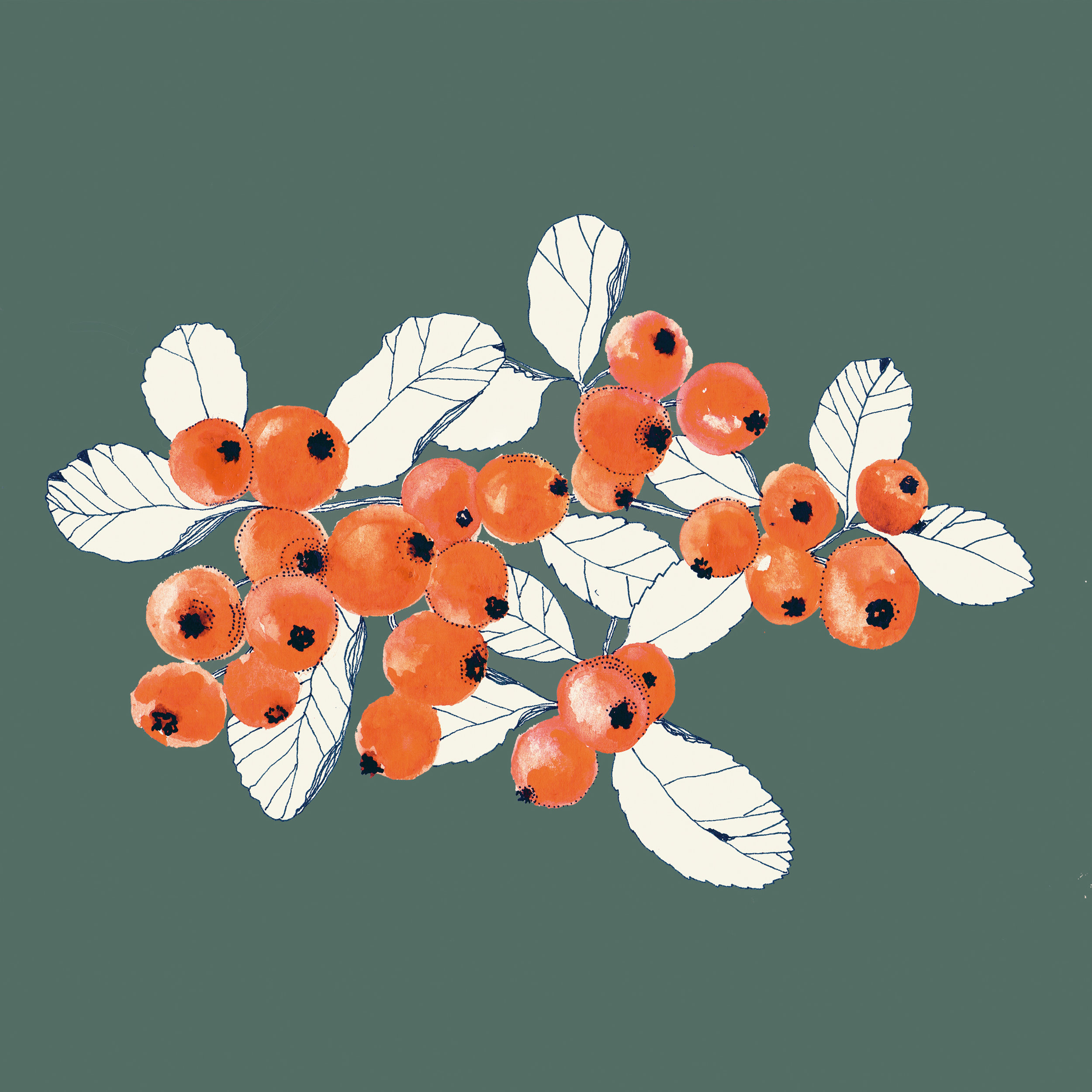 berries-studiokryszewski.jpg