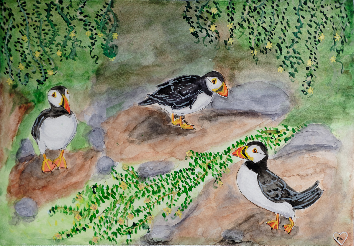 Puffins of Skellig Michael
