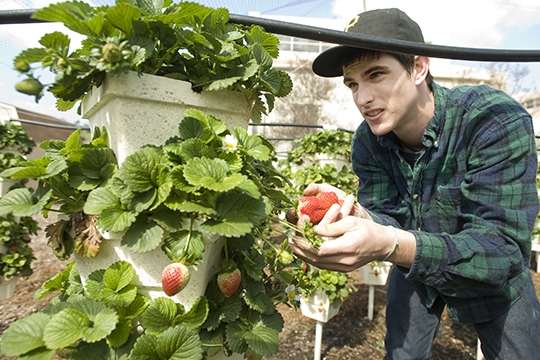 Urban Agriculture : Grower Supply house teaches Yuba City High students techniques to grow high yield crops.