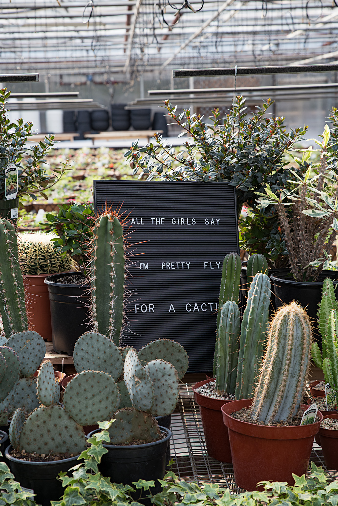 Pretty Fly for a Cacti-WEB.jpg