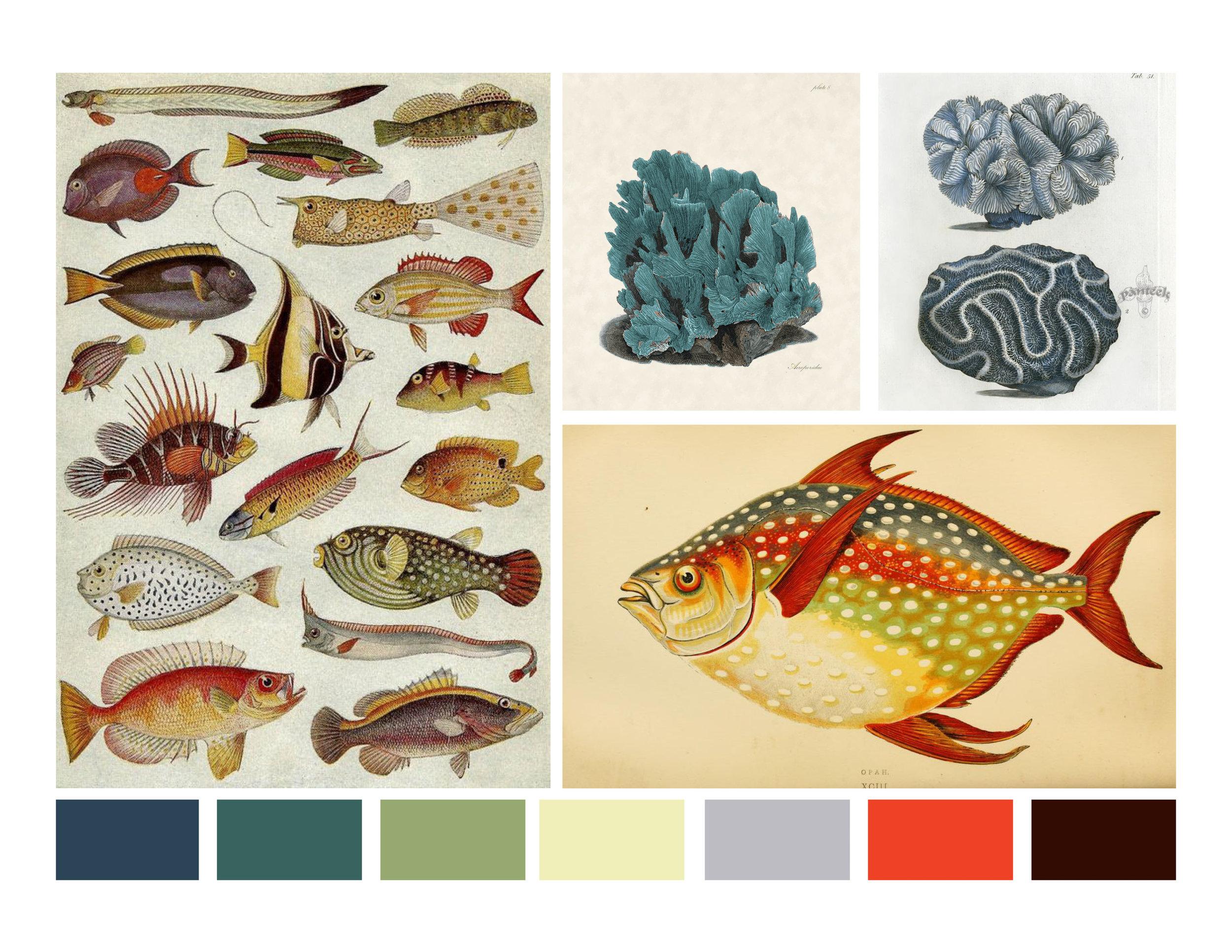 FISH_INSPO+COLOR.jpg