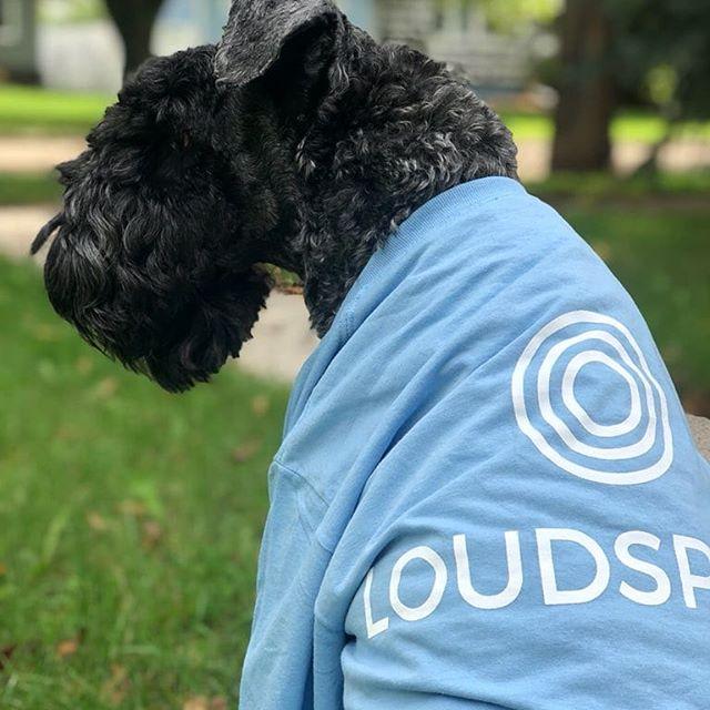New member of the team! #agency #agencylife #dogsofwinnipeg