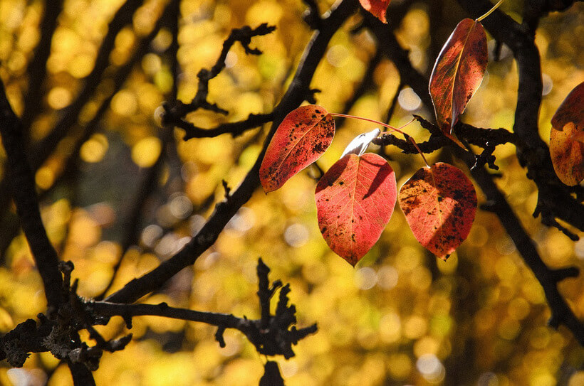 leaves-1030958_1280 (1)