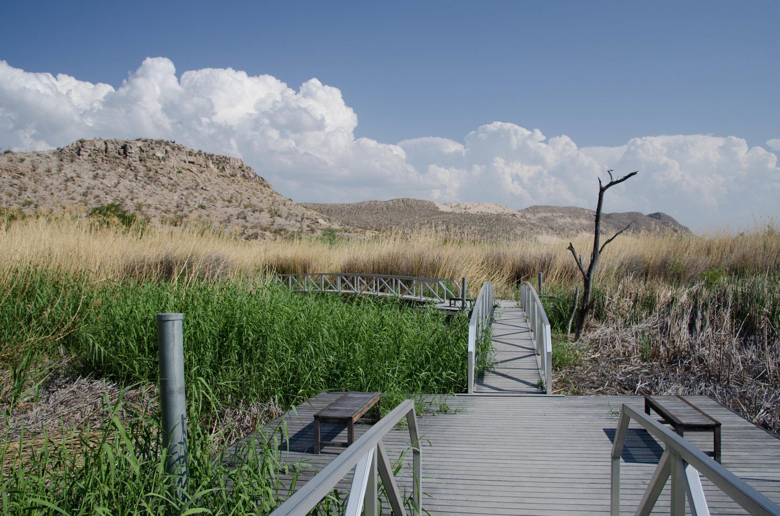 The nature center area